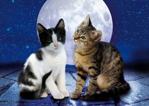 Puzzle 1000 Cats in the Moonlight