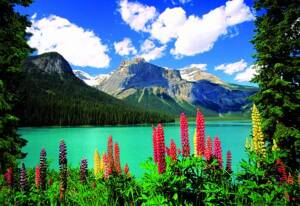 Puzzle 1000 Emerald Lake of Canadian Rockies