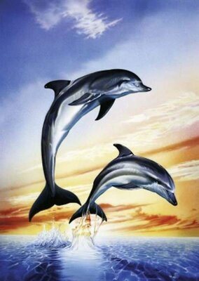 Puzzle 1000 Dolphins