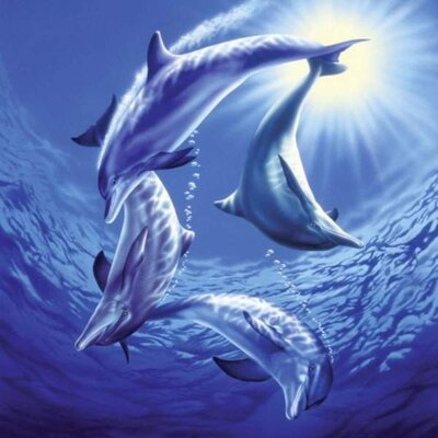 Puzzle 1000 Dolphins at Play